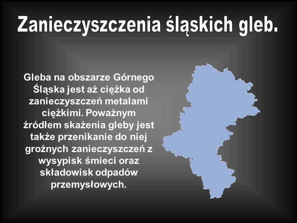 Gleba na obszarze Górnego Śląska jest aż ciężka od zanieczyszczeń metalami ciężkimi.