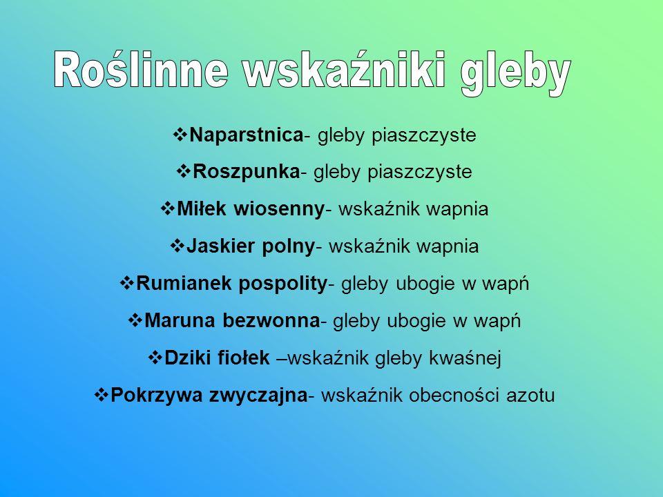Naparstnica Roszpunka Miłek wiosenny Jaskier polny