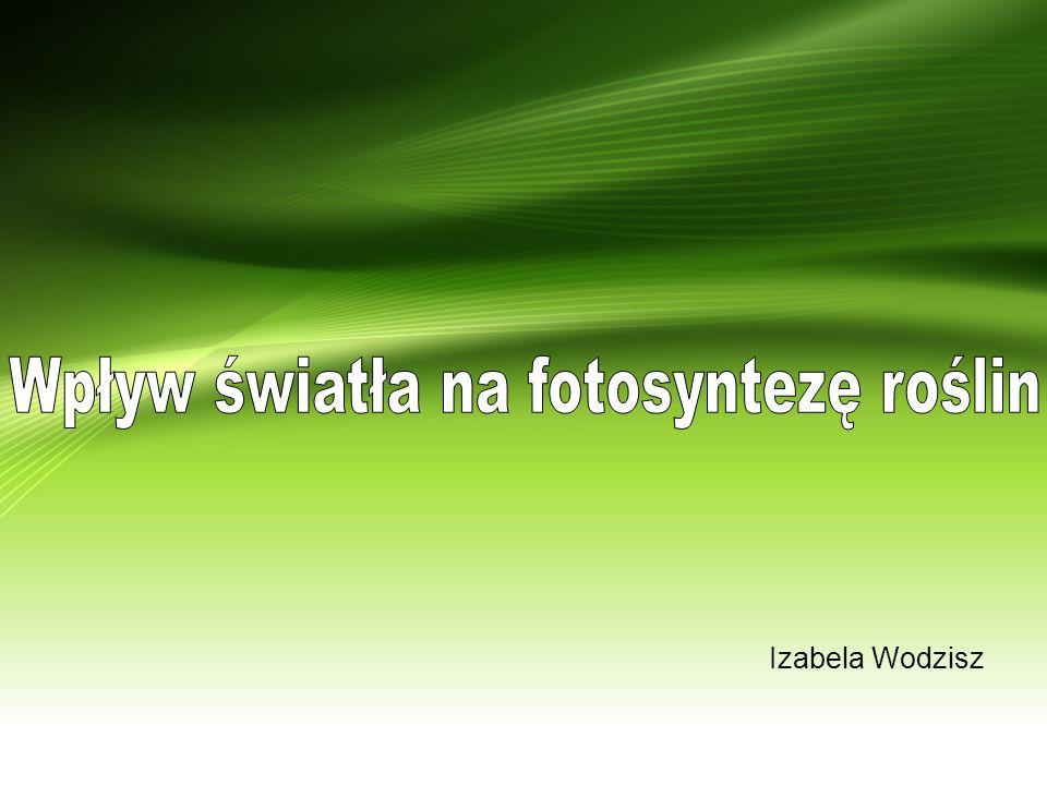 Izabela Wodzisz