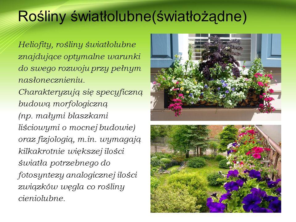 Rośliny światłolubne(światłożądne) Heliofity, rośliny światłolubne znajdujące optymalne warunki do swego rozwoju przy pełnym nasłonecznieniu. Charakte