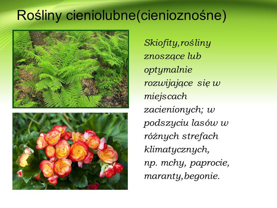 Rośliny cieniolubne(cienioznośne) Skiofity,rośliny znoszące lub optymalnie rozwijające się w miejscach zacienionych; w podszyciu lasów w różnych stref