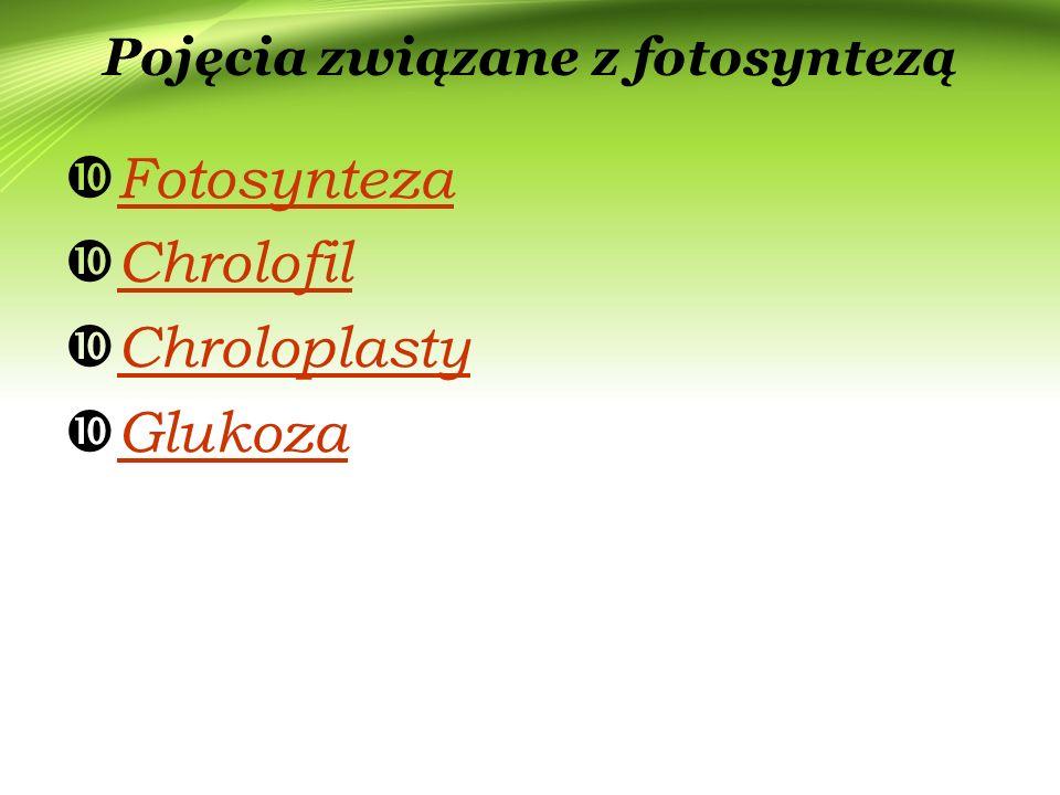 Pojęcia związane z fotosyntezą  Fotosynteza Fotosynteza  Chrolofil Chrolofil  Chroloplasty Chroloplasty  Glukoza Glukoza