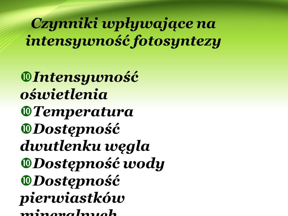 Czynniki wpływające na intensywność fotosyntezy  Intensywność oświetlenia  Temperatura  Dostępność dwutlenku węgla  Dostępność wody  Dostępność p