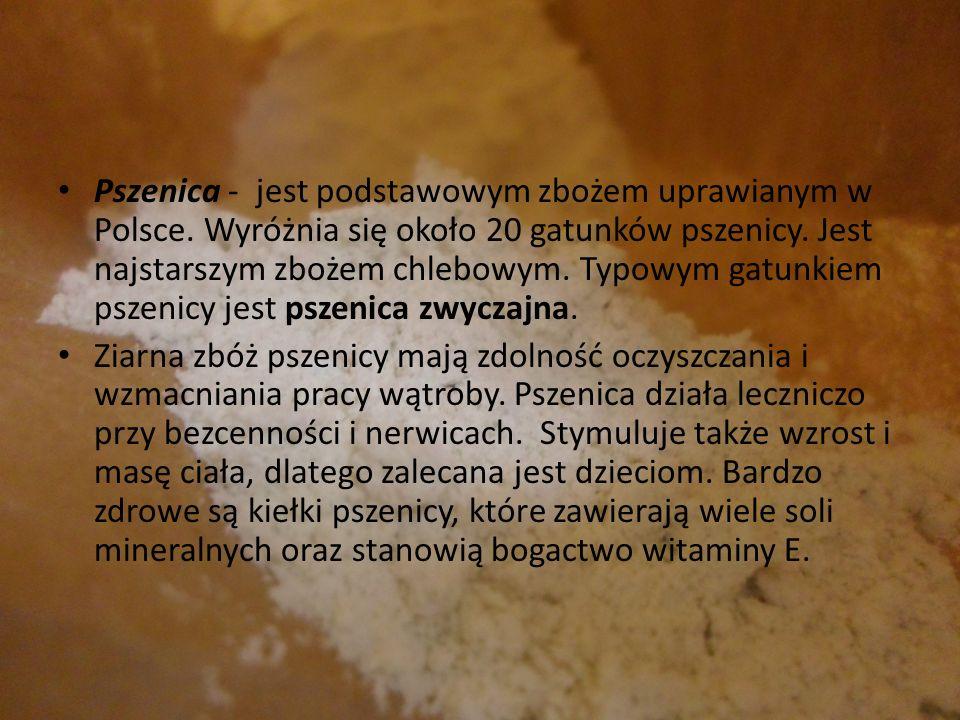 Pszenica - jest podstawowym zbożem uprawianym w Polsce. Wyróżnia się około 20 gatunków pszenicy. Jest najstarszym zbożem chlebowym. Typowym gatunkiem