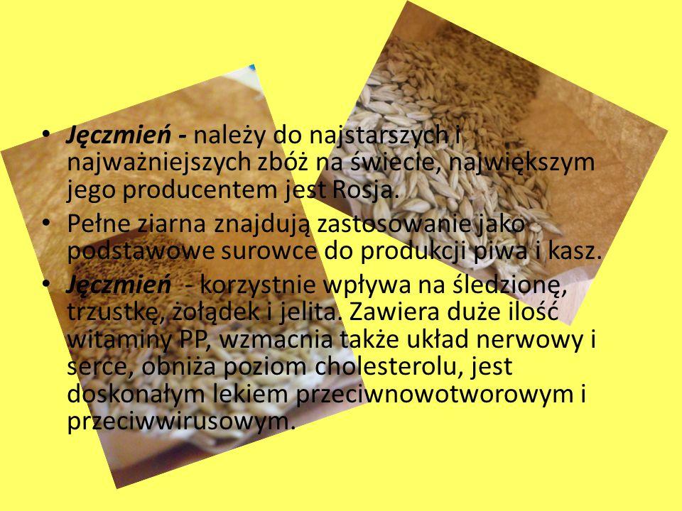 Jęczmień - należy do najstarszych i najważniejszych zbóż na świecie, największym jego producentem jest Rosja. Pełne ziarna znajdują zastosowanie jako
