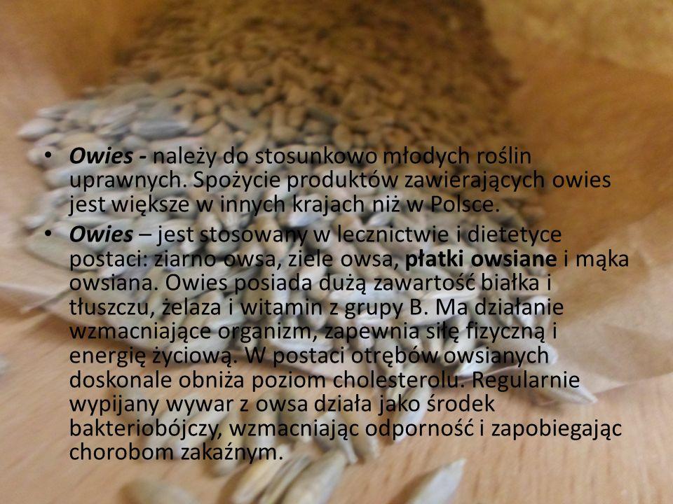 Owies - należy do stosunkowo młodych roślin uprawnych. Spożycie produktów zawierających owies jest większe w innych krajach niż w Polsce. Owies – jest