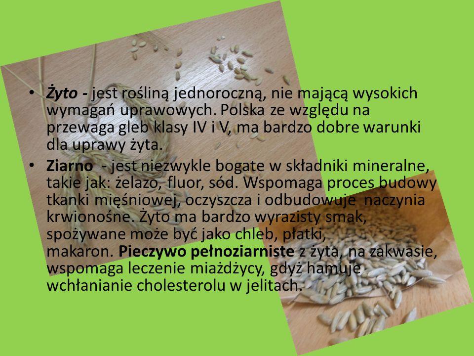 Żyto - jest rośliną jednoroczną, nie mającą wysokich wymagań uprawowych. Polska ze względu na przewaga gleb klasy IV i V, ma bardzo dobre warunki dla