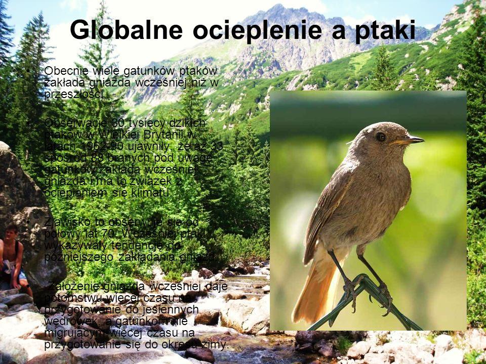Globalne ocieplenie a ptaki Obecnie wiele gatunków ptaków zakłada gniazda wcześniej niż w przeszłości. Obserwacje 30 tysięcy dzikich ptaków w Wielkiej