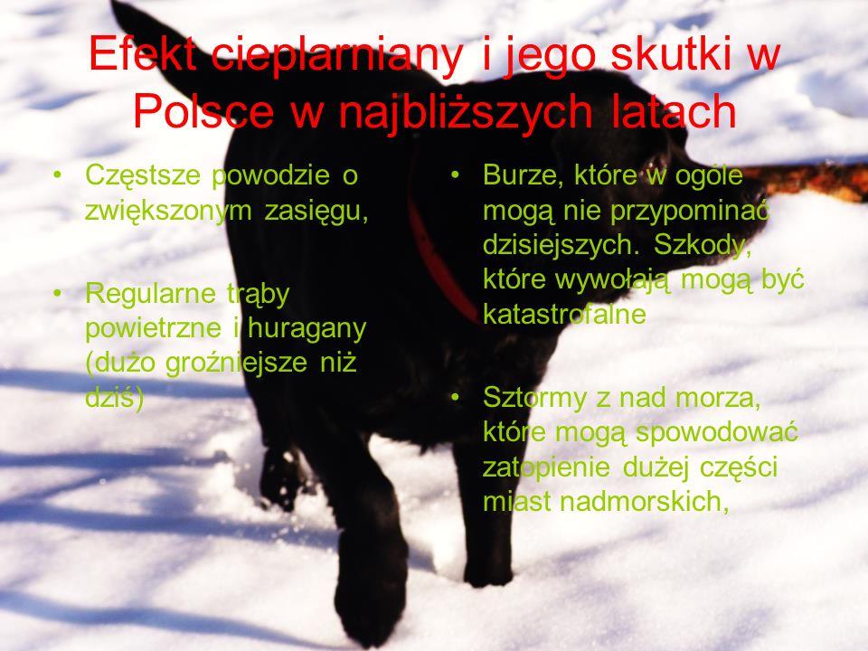 Efekt cieplarniany i jego skutki w Polsce w najbliższych latach Częstsze powodzie o zwiększonym zasięgu, Regularne trąby powietrzne i huragany (dużo g
