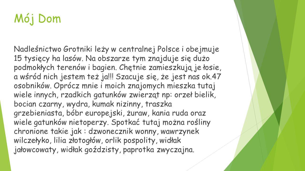 Mój Dom Nadleśnictwo Grotniki leży w centralnej Polsce i obejmuje 15 tysięcy ha lasów.