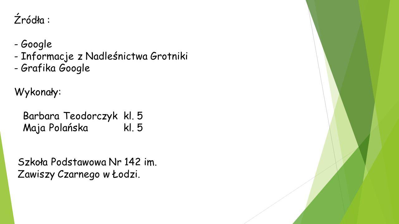Źródła : - Google - Informacje z Nadleśnictwa Grotniki - Grafika Google Wykonały: Barbara Teodorczyk kl.