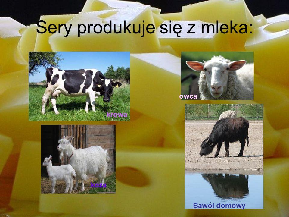 Sery produkuje się z mleka: Bawół domowy koza krowa owca
