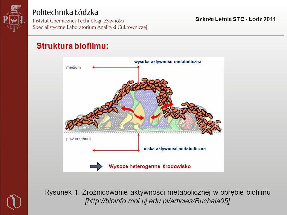 Szkoła Letnia STC - Łódź 2011 Struktura biofilmu: Rysunek 1.