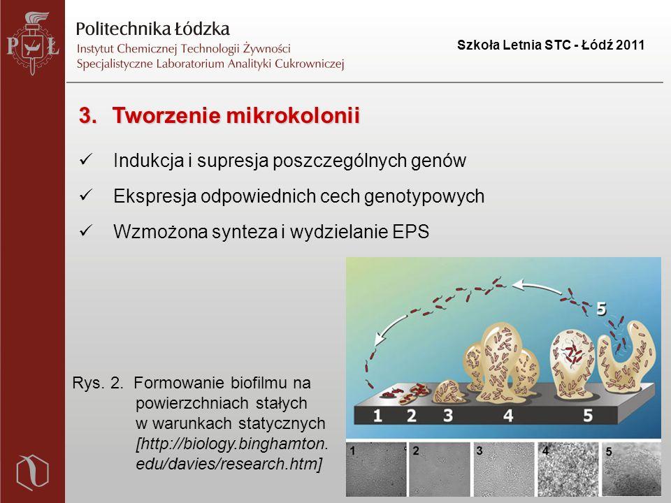 Szkoła Letnia STC - Łódź 2011 3.Tworzenie mikrokolonii Indukcja i supresja poszczególnych genów Ekspresja odpowiednich cech genotypowych Wzmożona synteza i wydzielanie EPS Rys.