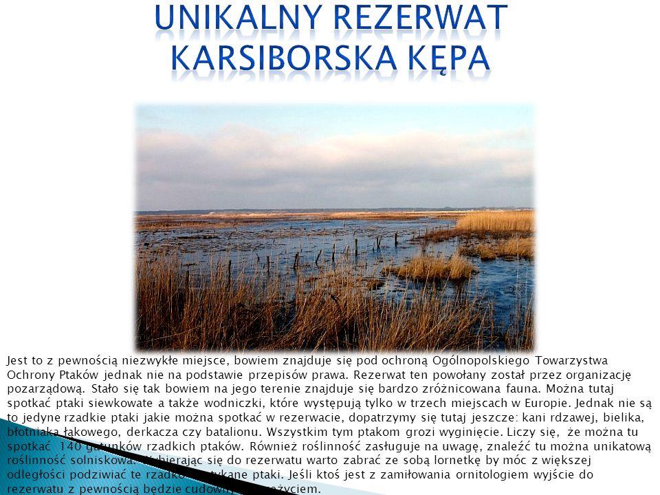 Jest to z pewnością niezwykłe miejsce, bowiem znajduje się pod ochroną Ogólnopolskiego Towarzystwa Ochrony Ptaków jednak nie na podstawie przepisów pr