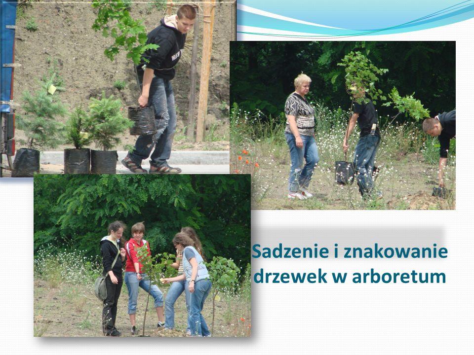 Sadzenie i znakowanie drzewek w arboretum