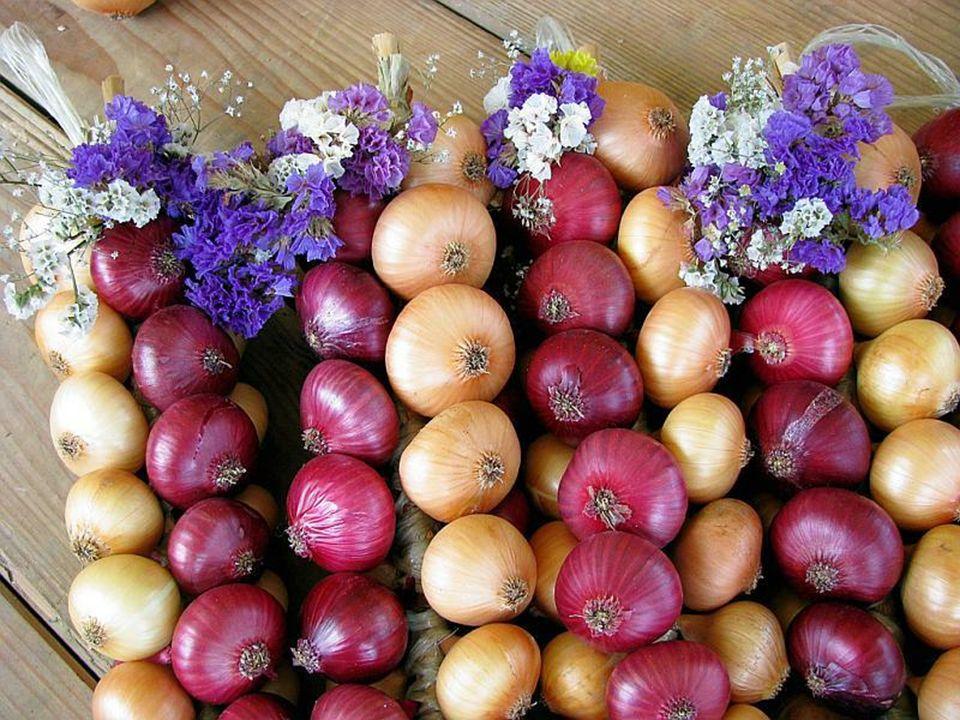 Dzisiaj obok 300 stoisk z cebulą ustawionych jest ponad 400 stoisk z innymi towarami. Podczas Targu Cebulowego sprzedawanych jest do 70 ton cebuli, na