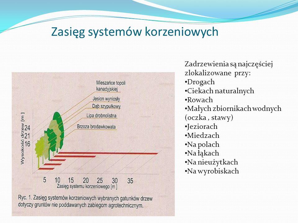 Zasięg systemów korzeniowych Zadrzewienia są najczęściej zlokalizowane przy: Drogach Ciekach naturalnych Rowach Małych zbiornikach wodnych (oczka, stawy) Jeziorach Miedzach Na polach Na łąkach Na nieużytkach Na wyrobiskach