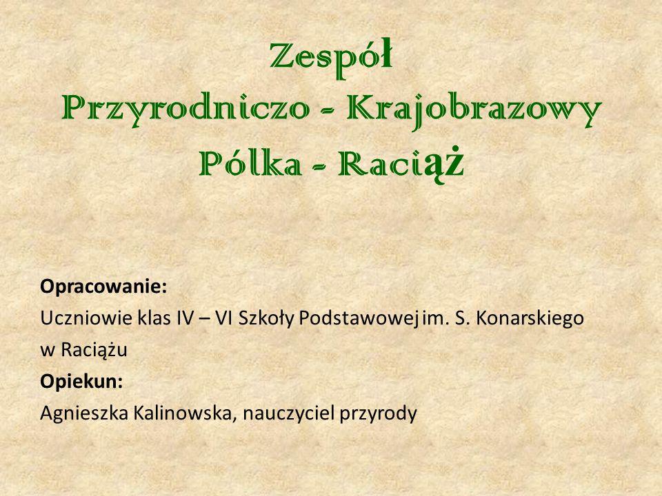 Zespó ł Przyrodniczo - Krajobrazowy Pólka - Raci ąż Opracowanie: Uczniowie klas IV – VI Szkoły Podstawowej im.