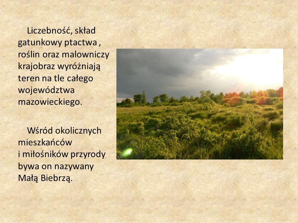 Liczebność, skład gatunkowy ptactwa, roślin oraz malowniczy krajobraz wyróżniają teren na tle całego województwa mazowieckiego.