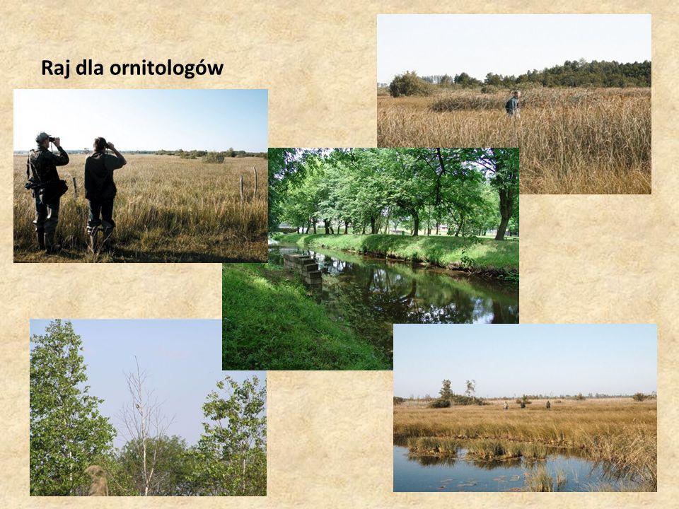 Raj dla ornitologów