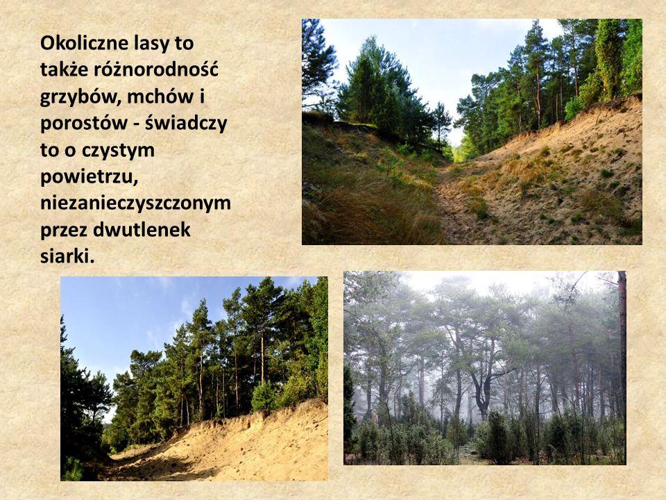Okoliczne lasy to także różnorodność grzybów, mchów i porostów - świadczy to o czystym powietrzu, niezanieczyszczonym przez dwutlenek siarki.