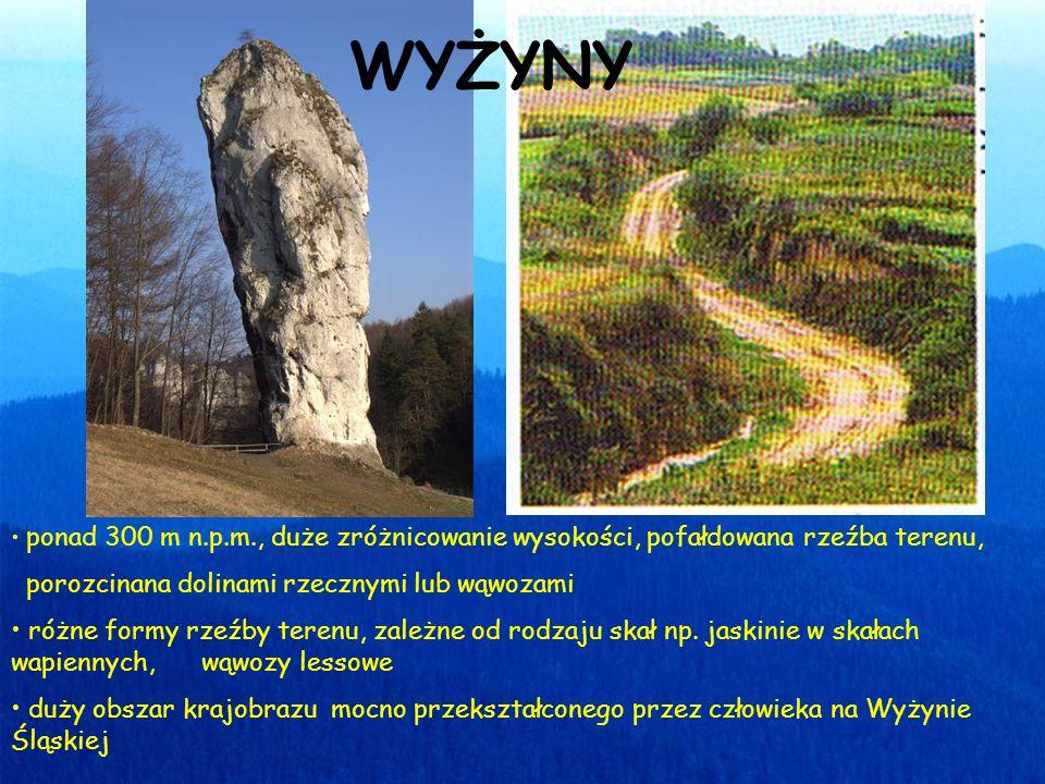 ponad 300 m n.p.m., duże zróżnicowanie wysokości, pofałdowana rzeźba terenu, porozcinana dolinami rzecznymi lub wąwozami różne formy rzeźby terenu, zależne od rodzaju skał np.
