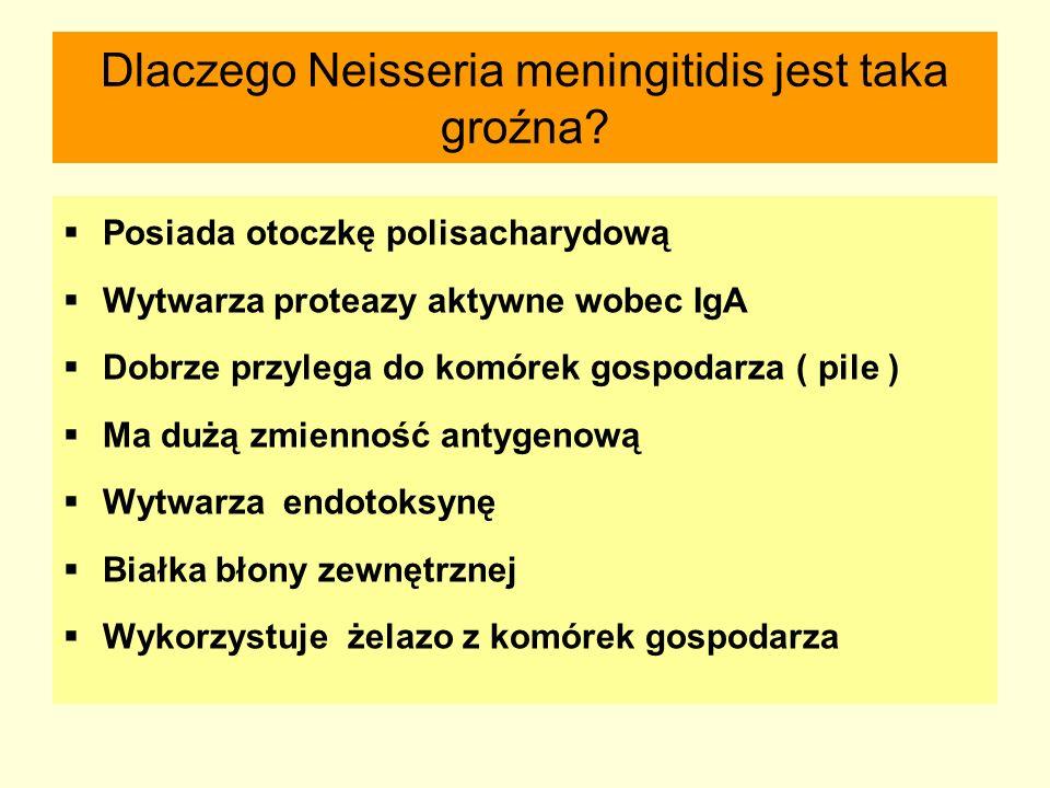 Dlaczego Neisseria meningitidis jest taka groźna?  Posiada otoczkę polisacharydową  Wytwarza proteazy aktywne wobec IgA  Dobrze przylega do komórek