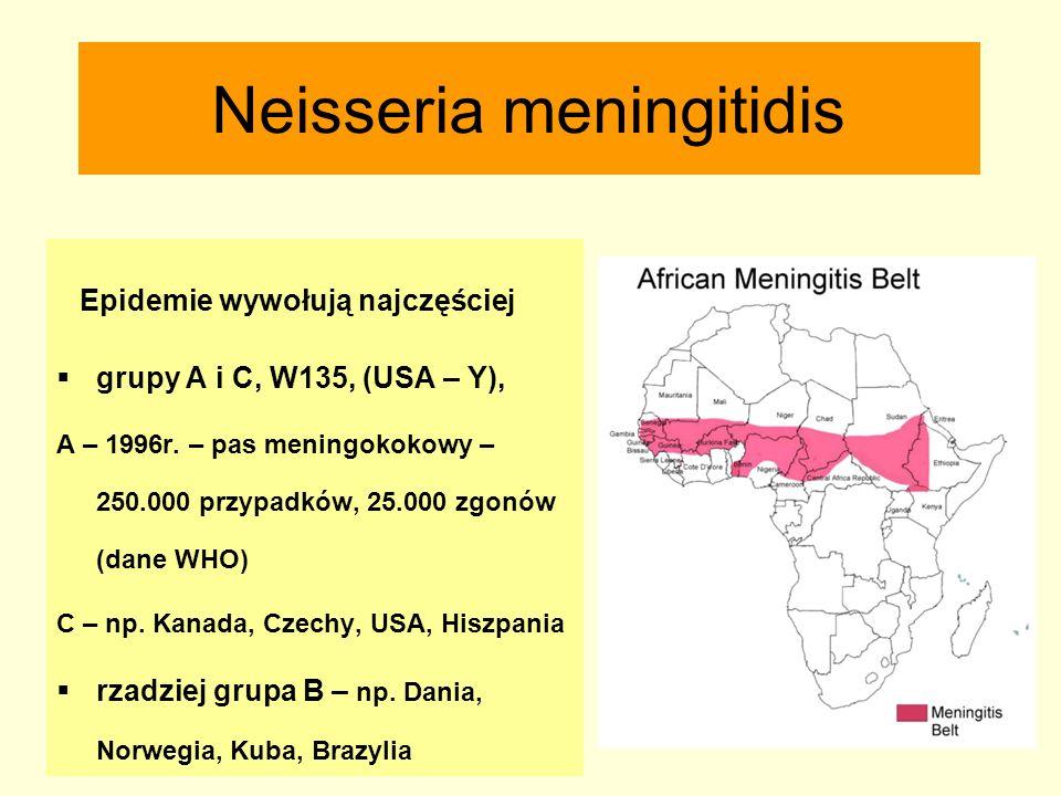 Neisseria meningitidis Epidemie wywołują najczęściej  grupy A i C, W135, (USA – Y), A – 1996r. – pas meningokokowy – 250.000 przypadków, 25.000 zgonó