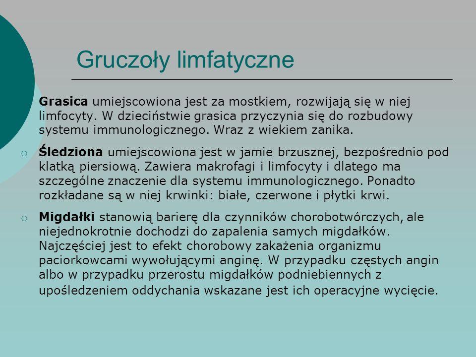 Gruczoły limfatyczne o Grasica umiejscowiona jest za mostkiem, rozwijają się w niej limfocyty. W dzieciństwie grasica przyczynia się do rozbudowy syst