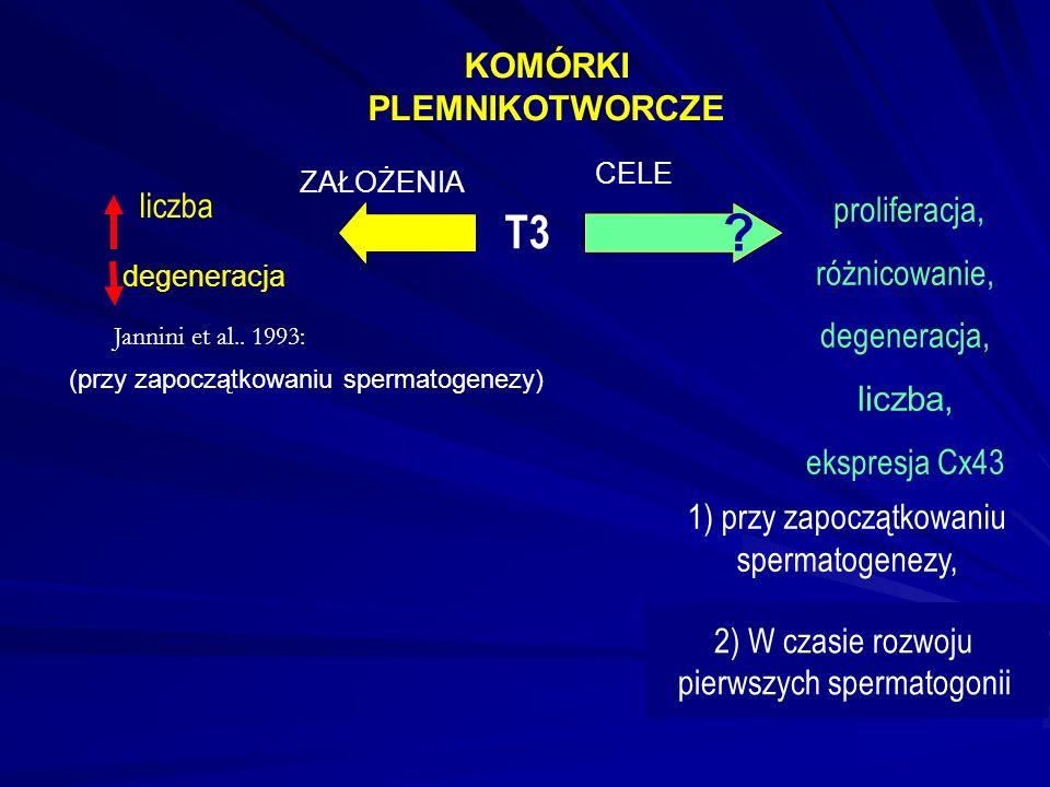 T3 1) przy zapoczątkowaniu spermatogenezy, liczba proliferacja, różnicowanie, degeneracja, liczba, ekspresja Cx43 KOMÓRKI PLEMNIKOTWORCZE .