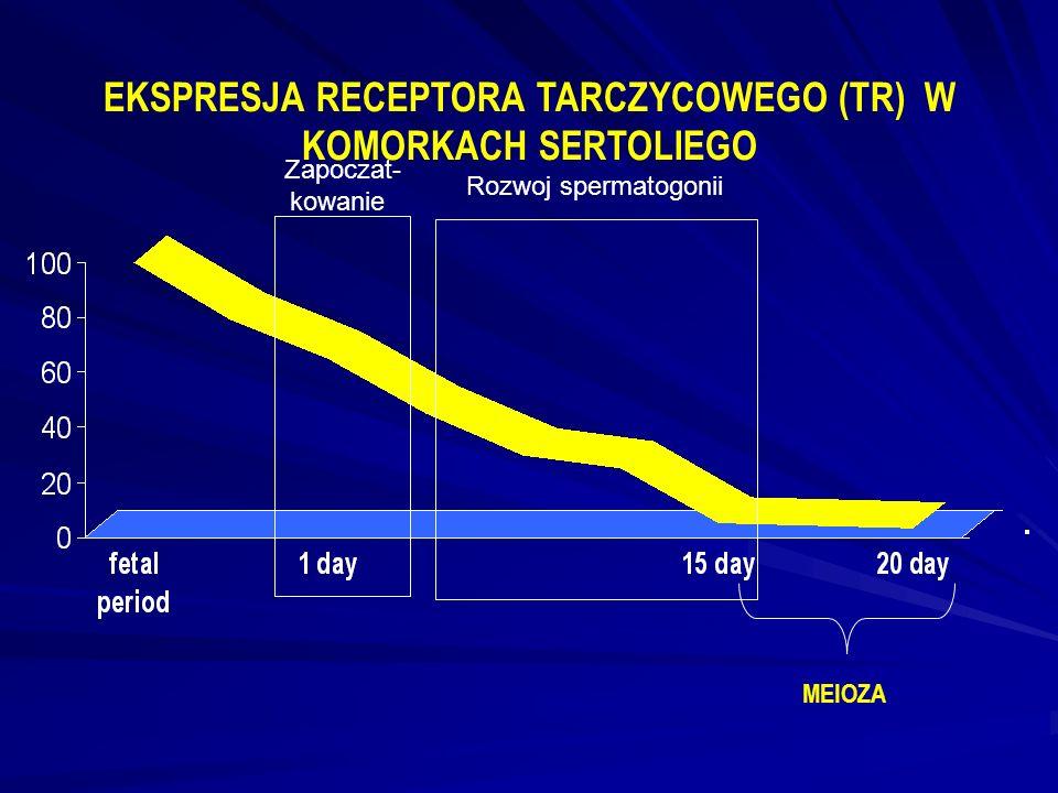 EKSPRESJA RECEPTORA TARCZYCOWEGO (TR) W KOMORKACH SERTOLIEGO MEIOZA Zapoczat- kowanie Rozwoj spermatogonii