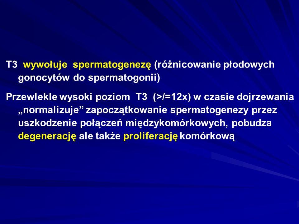"""T3 wywołuje spermatogenezę (różnicowanie płodowych gonocytów do spermatogonii) Przewlekle wysoki poziom T3 (>/=12x) w czasie dojrzewania """"normalizuje zapoczątkowanie spermatogenezy przez uszkodzenie połączeń międzykomórkowych, pobudza degenerację ale także proliferację komórkową"""