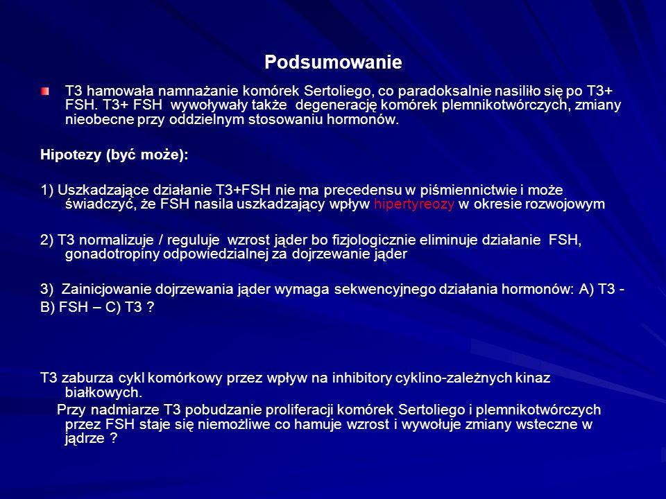 Podsumowanie T3 hamowała namnażanie komórek Sertoliego, co paradoksalnie nasiliło się po T3+ FSH.