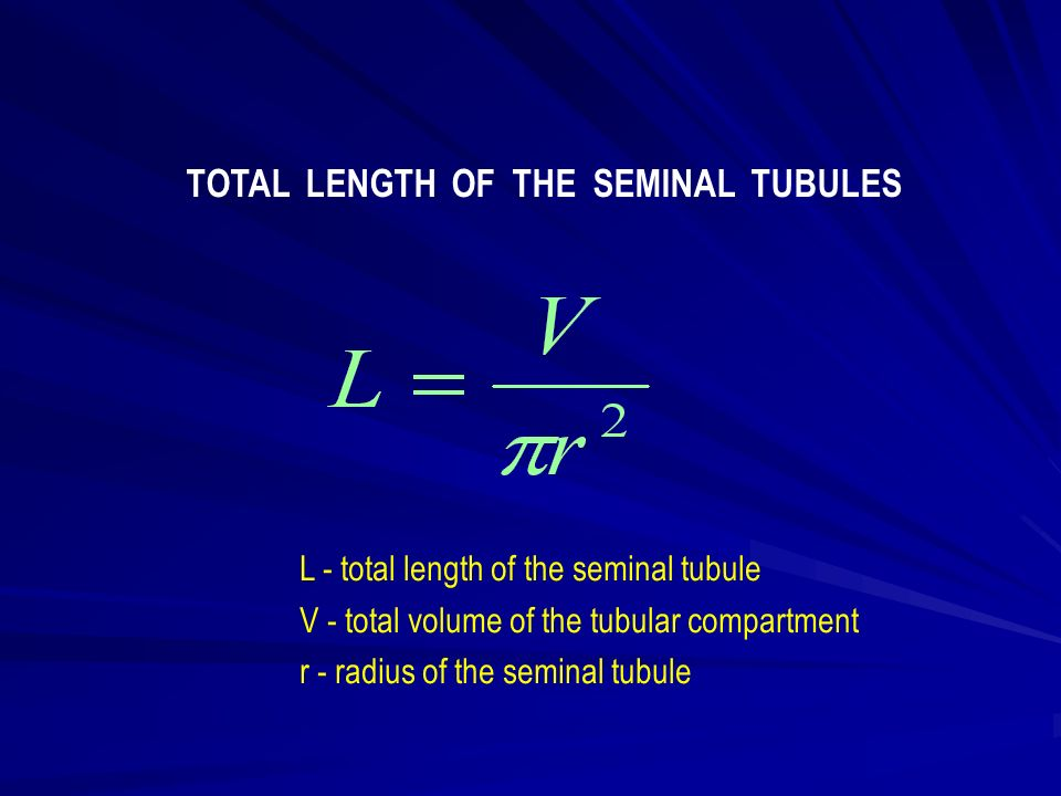 L - total length of the seminal tubule V - total volume of the tubular compartment r - radius of the seminal tubule TOTAL LENGTH OF THE SEMINAL TUBULES