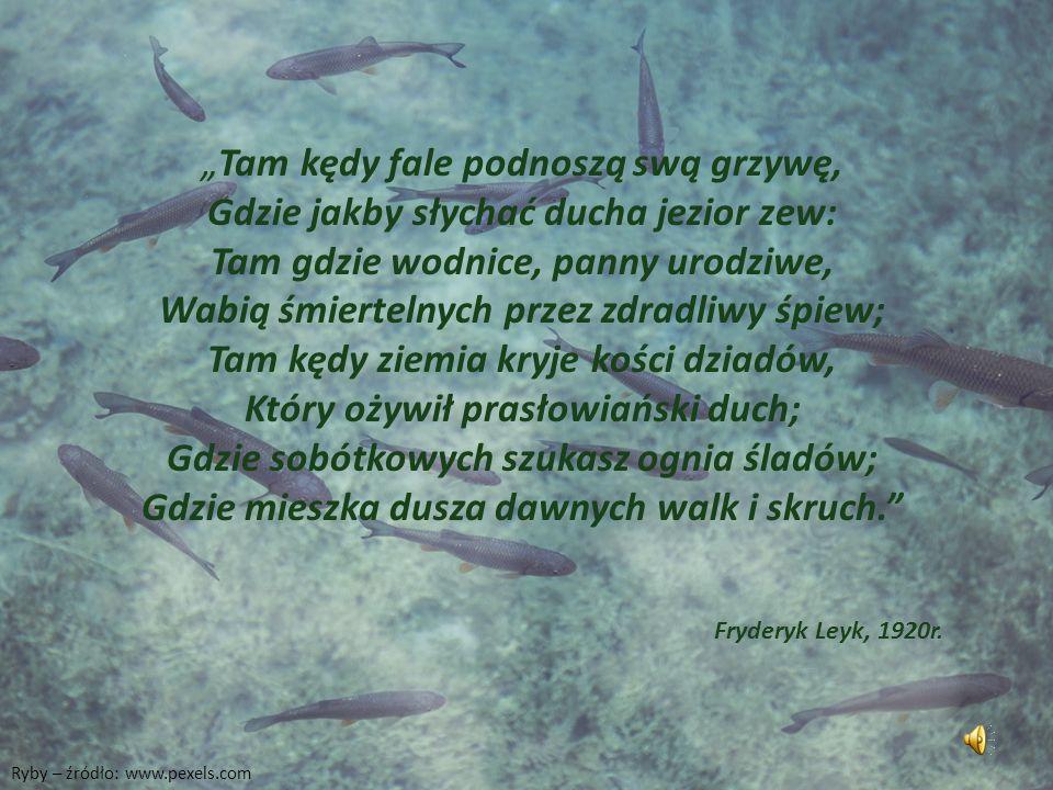 """Ryby – źródło: www.pexels.com """"Tam kędy fale podnoszą swą grzywę, Gdzie jakby słychać ducha jezior zew: Tam gdzie wodnice, panny urodziwe, Wabią śmiertelnych przez zdradliwy śpiew; Tam kędy ziemia kryje kości dziadów, Który ożywił prasłowiański duch; Gdzie sobótkowych szukasz ognia śladów; Gdzie mieszka dusza dawnych walk i skruch. Fryderyk Leyk, 1920r."""