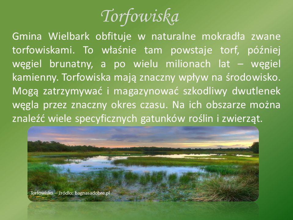 Torfowiska Gmina Wielbark obfituje w naturalne mokradła zwane torfowiskami.