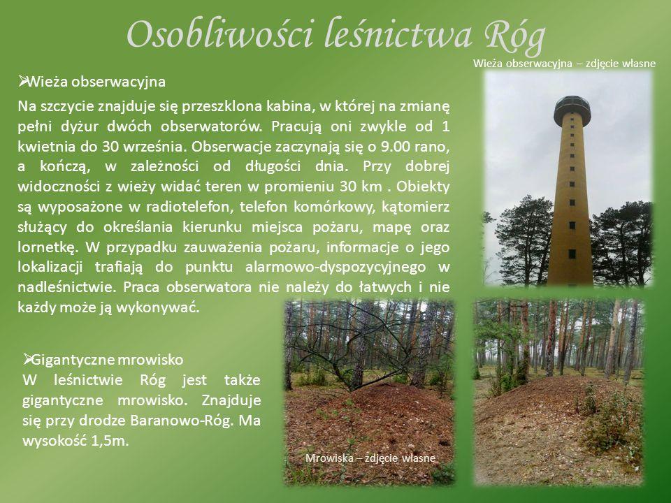 Osobliwości leśnictwa Róg  Wieża obserwacyjna Na szczycie znajduje się przeszklona kabina, w której na zmianę pełni dyżur dwóch obserwatorów.