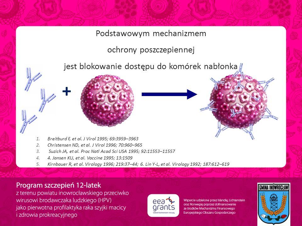 Podstawowym mechanizmem ochrony poszczepiennej jest blokowanie dostępu do komórek nabłonka + 1.Breitburd F, et al. J Virol 1995; 69:3959–3963 2.Christ