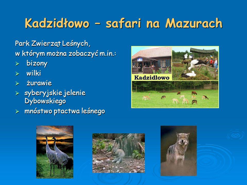 Kadzidłowo – safari na Mazurach Park Zwierząt Leśnych, w którym można zobaczyć m.in.:  bizony  wilki  żurawie  syberyjskie jelenie Dybowskiego  m
