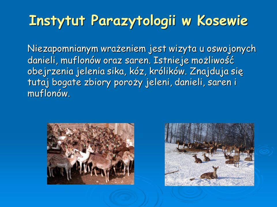 Instytut Parazytologii w Kosewie Niezapomnianym wrażeniem jest wizyta u oswojonych danieli, muflonów oraz saren. Istnieje możliwość obejrzenia jelenia