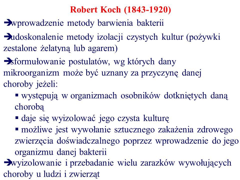 Robert Koch (1843-1920)  udoskonalenie metody izolacji czystych kultur (pożywki zestalone żelatyną lub agarem)  sformułowanie postulatów, wg których dany mikroorganizm może być uznany za przyczynę danej choroby jeżeli:  wprowadzenie metody barwienia bakterii  występują w organizmach osobników dotkniętych daną chorobą  daje się wyizolować jego czysta kulturę  możliwe jest wywołanie sztucznego zakażenia zdrowego zwierzęcia doświadczalnego poprzez wprowadzenie do jego organizmu danej bakterii  wyizolowanie i przebadanie wielu zarazków wywołujących choroby u ludzi i zwierząt