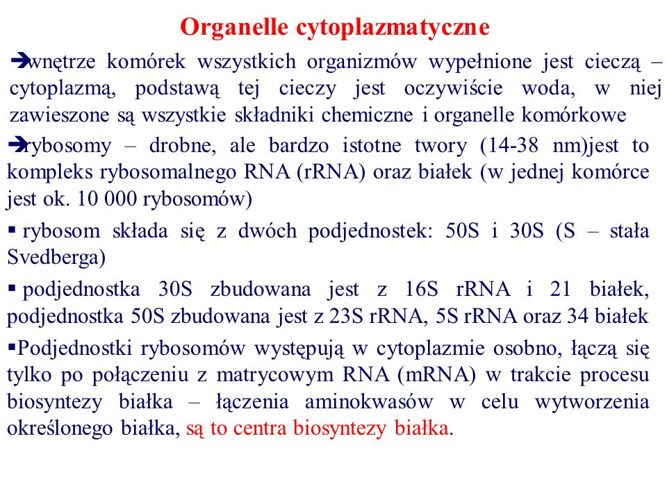 Organelle cytoplazmatyczne  wnętrze komórek wszystkich organizmów wypełnione jest cieczą – cytoplazmą, podstawą tej cieczy jest oczywiście woda, w niej zawieszone są wszystkie składniki chemiczne i organelle komórkowe  rybosomy – drobne, ale bardzo istotne twory (14-38 nm)jest to kompleks rybosomalnego RNA (rRNA) oraz białek (w jednej komórce jest ok.