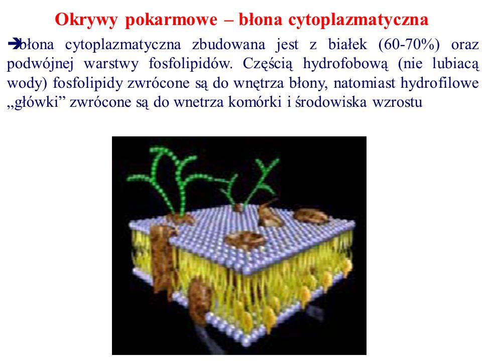 Okrywy pokarmowe – błona cytoplazmatyczna  błona cytoplazmatyczna zbudowana jest z białek (60-70%) oraz podwójnej warstwy fosfolipidów. Częścią hydro