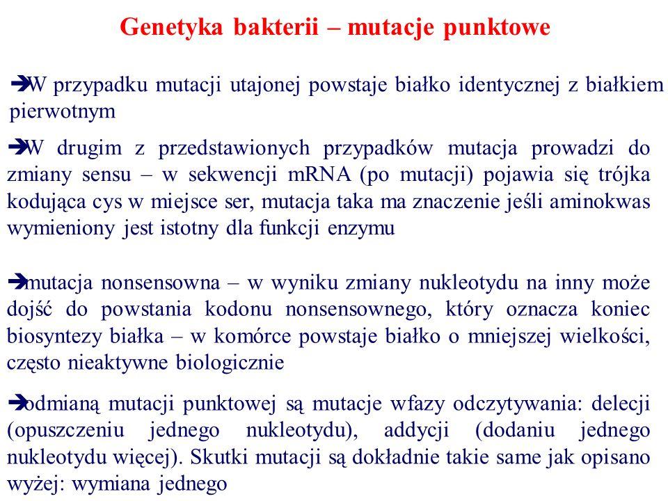 Genetyka bakterii – mutacje punktowe  W przypadku mutacji utajonej powstaje białko identycznej z białkiem pierwotnym  W drugim z przedstawionych prz