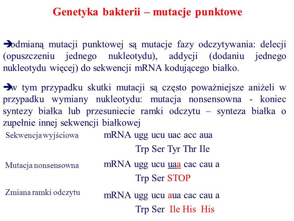Genetyka bakterii – mutacje punktowe  odmianą mutacji punktowej są mutacje fazy odczytywania: delecji (opuszczeniu jednego nukleotydu), addycji (dodaniu jednego nukleotydu więcej) do sekwencji mRNA kodującego białko.