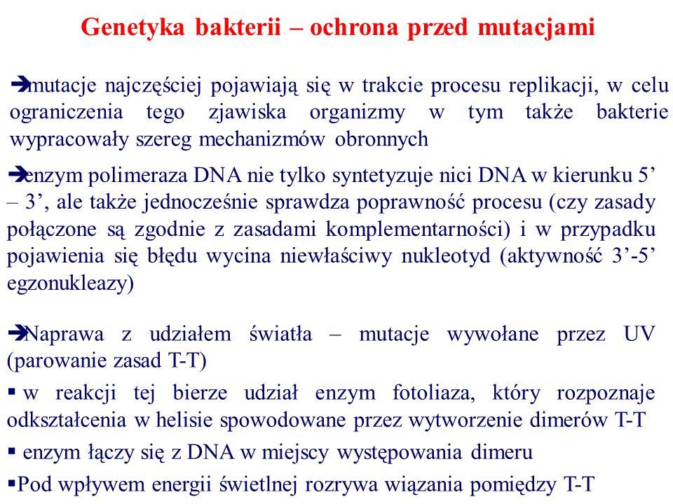Genetyka bakterii – ochrona przed mutacjami  mutacje najczęściej pojawiają się w trakcie procesu replikacji, w celu ograniczenia tego zjawiska organizmy w tym także bakterie wypracowały szereg mechanizmów obronnych  enzym polimeraza DNA nie tylko syntetyzuje nici DNA w kierunku 5' – 3', ale także jednocześnie sprawdza poprawność procesu (czy zasady połączone są zgodnie z zasadami komplementarności) i w przypadku pojawienia się błędu wycina niewłaściwy nukleotyd (aktywność 3'-5' egzonukleazy)  Naprawa z udziałem światła – mutacje wywołane przez UV (parowanie zasad T-T)  w reakcji tej bierze udział enzym fotoliaza, który rozpoznaje odkształcenia w helisie spowodowane przez wytworzenie dimerów T-T  enzym łączy się z DNA w miejscy występowania dimeru  Pod wpływem energii świetlnej rozrywa wiązania pomiędzy T-T