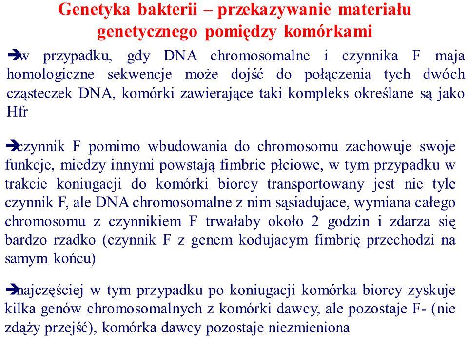Genetyka bakterii – przekazywanie materiału genetycznego pomiędzy komórkami  w przypadku, gdy DNA chromosomalne i czynnika F maja homologiczne sekwencje może dojść do połączenia tych dwóch cząsteczek DNA, komórki zawierające taki kompleks określane są jako Hfr  czynnik F pomimo wbudowania do chromosomu zachowuje swoje funkcje, miedzy innymi powstają fimbrie płciowe, w tym przypadku w trakcie koniugacji do komórki biorcy transportowany jest nie tyle czynnik F, ale DNA chromosomalne z nim sąsiadujace, wymiana całego chromosomu z czynnikiem F trwałaby około 2 godzin i zdarza się bardzo rzadko (czynnik F z genem kodujacym fimbrię przechodzi na samym końcu)  najczęściej w tym przypadku po koniugacji komórka biorcy zyskuje kilka genów chromosomalnych z komórki dawcy, ale pozostaje F- (nie zdąży przejść), komórka dawcy pozostaje niezmieniona