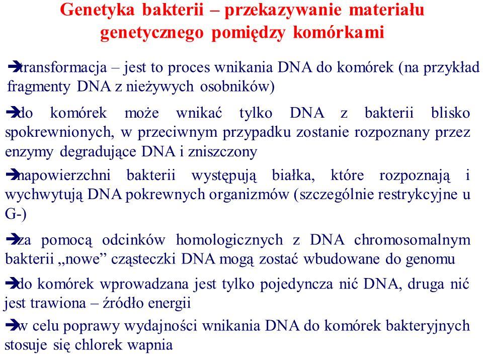 """Genetyka bakterii – przekazywanie materiału genetycznego pomiędzy komórkami  transformacja – jest to proces wnikania DNA do komórek (na przykład fragmenty DNA z nieżywych osobników)  do komórek może wnikać tylko DNA z bakterii blisko spokrewnionych, w przeciwnym przypadku zostanie rozpoznany przez enzymy degradujące DNA i zniszczony  napowierzchni bakterii występują białka, które rozpoznają i wychwytują DNA pokrewnych organizmów (szczególnie restrykcyjne u G-)  za pomocą odcinków homologicznych z DNA chromosomalnym bakterii """"nowe cząsteczki DNA mogą zostać wbudowane do genomu  do komórek wprowadzana jest tylko pojedyncza nić DNA, druga nić jest trawiona – źródło energii  w celu poprawy wydajności wnikania DNA do komórek bakteryjnych stosuje się chlorek wapnia"""