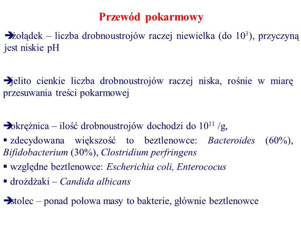 Przewód pokarmowy  żołądek – liczba drobnoustrojów raczej niewielka (do 10 3 ), przyczyną jest niskie pH  jelito cienkie liczba drobnoustrojów raczej niska, rośnie w miarę przesuwania treści pokarmowej  okrężnica – ilość drobnoustrojów dochodzi do 10 11 /g,  zdecydowana większość to beztlenowce: Bacteroides (60%), Bifidobacterium (30%), Clostridium perfringens  względne beztlenowce: Escherichia coli, Enterococus  drożdżaki – Candida albicans  stolec – ponad połowa masy to bakterie, głównie beztlenowce
